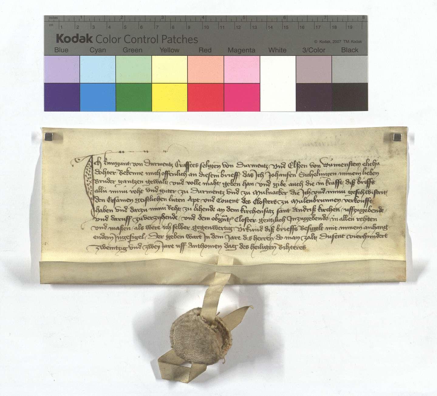 Kunigundes von Dürrmenz Einwilligung in den Verkauf der Güter ihres Bruders in Dürrmenz und Mühlacker (Mülacker)., Text