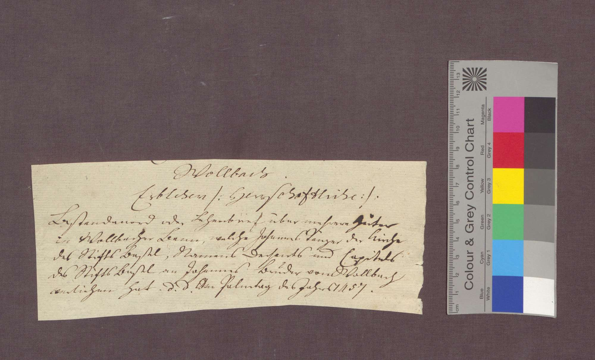 Lehnbrief der Basler St. Johannes-Bruderschaft auf Burg für Johannes Bruder zu Wollbach., Bild 3