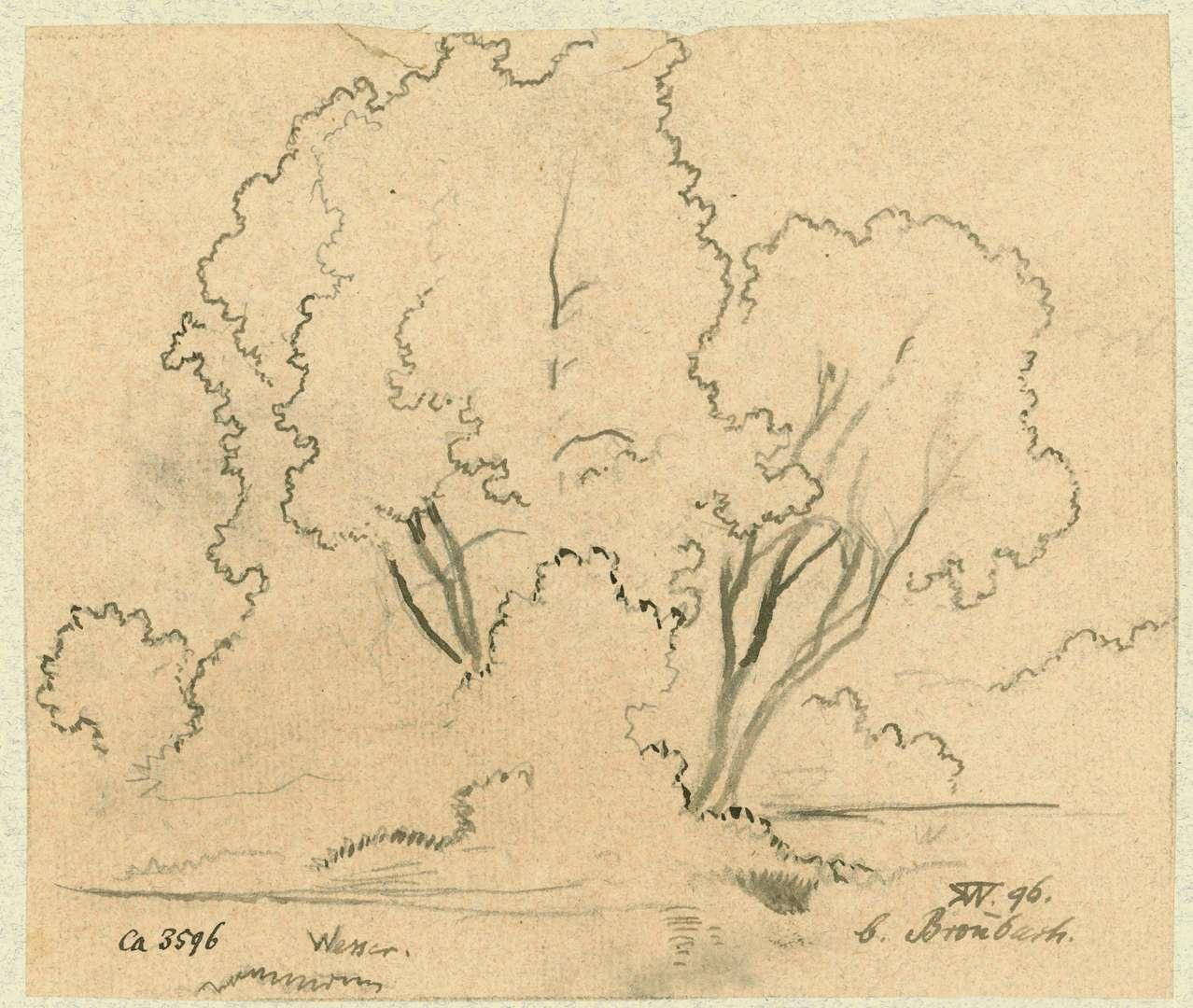 Bronnbach Weiden am Ufer der Tauber, Bild 1