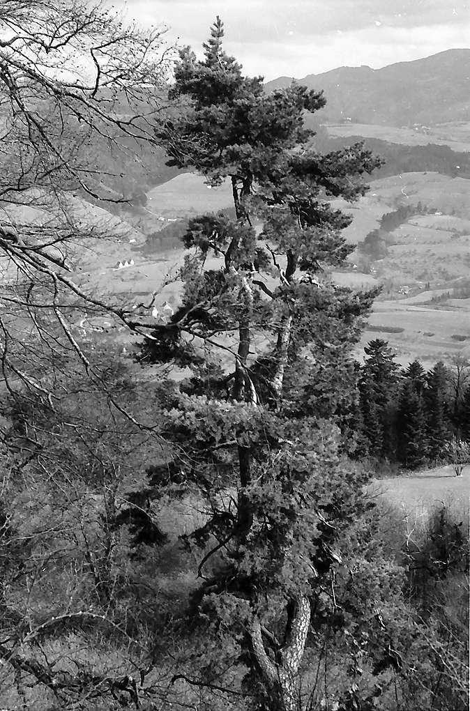 Merzhausen von oben, Bild 1