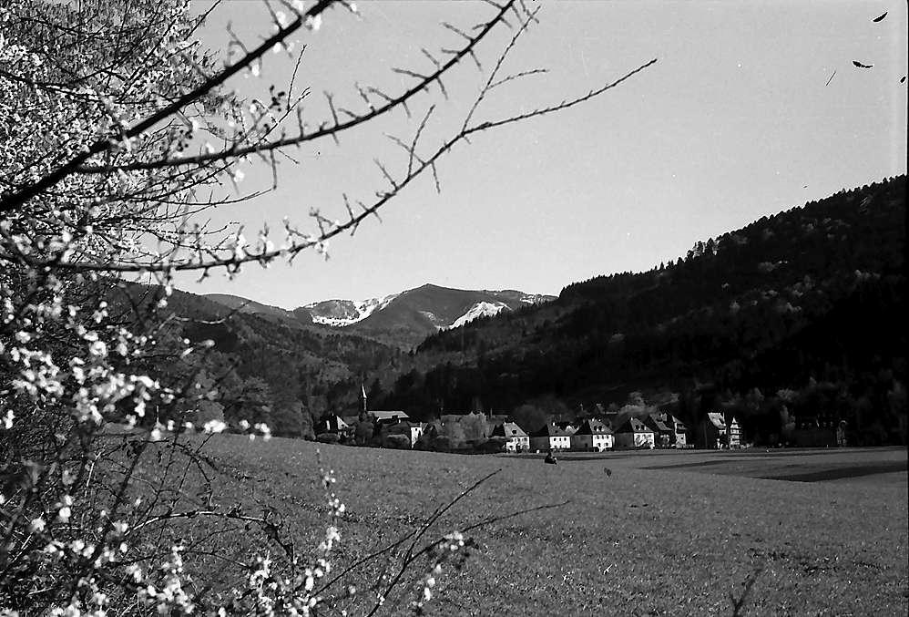 Freiburg i. Br.: Blick von der Mathiasmatte auf Günterstal, Bild 1