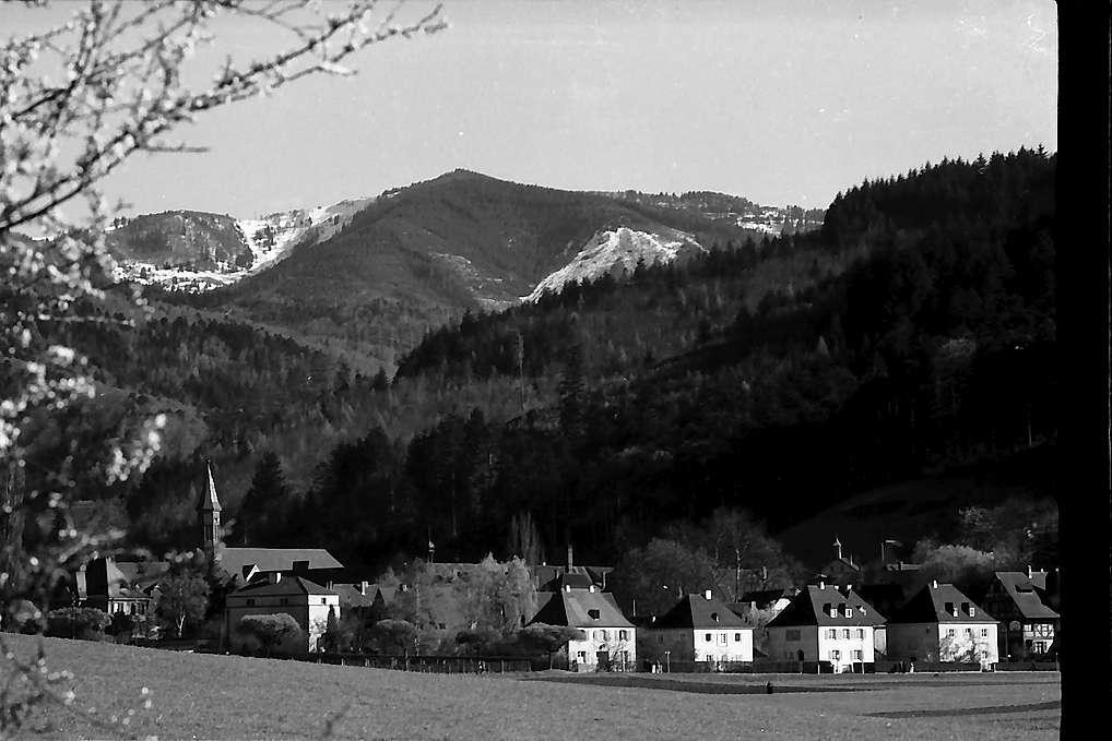 Freiburg i. Br.: Blick von der Mathiasmatte auf Günterstal mit Blütenzweigen, Bild 1