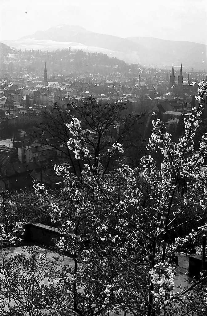 Freiburg i. Br.: Blick vom Schlossberg auf Wiehre und Schönberg, Vordergrund Blüten, Bild 1