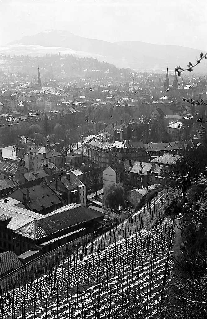 Freiburg i. Br.: Blick vom Schlossberg auf Wiehre und Schönberg, Vordergrund Weinberge, Bild 1