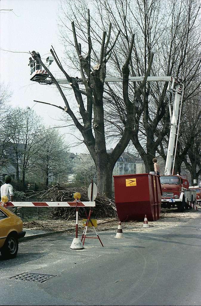 Freiburg i. Br.: Baumfällen in der Oberau, Bild 1