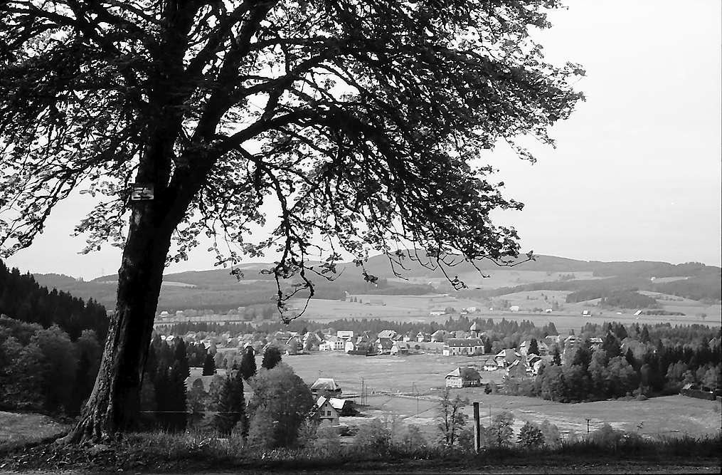 Blick von einem Hügel auf den Ort Hinterzarten, Bild 1