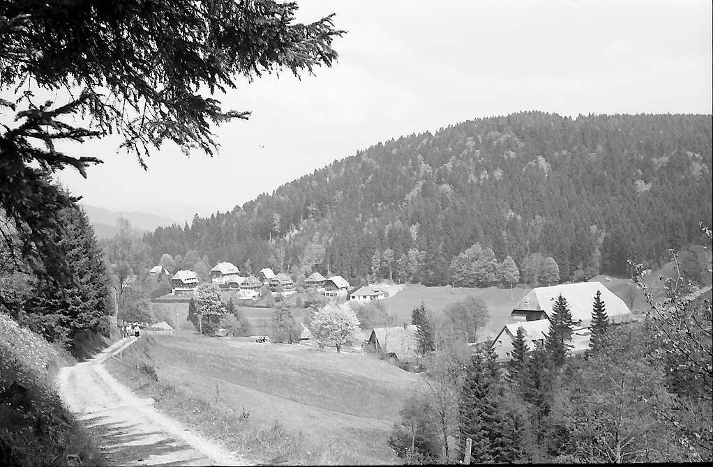 Weg am Hang bei Hinterzarten, Bild 1