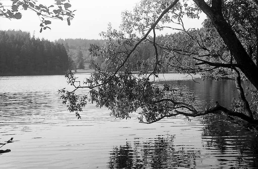 Schlüchtsee bei Grafenhausen mit Baumästen am Seeufer, Bild 1