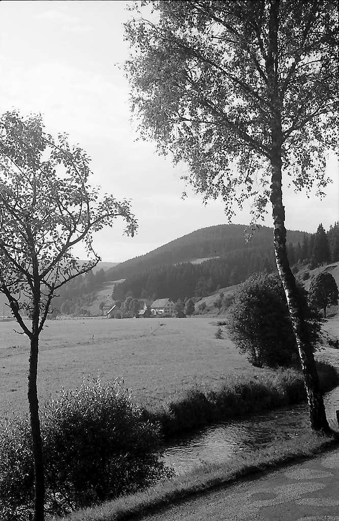 Bergtal unterhalb Hammereisenbach durch zwei Birken, Bild 1