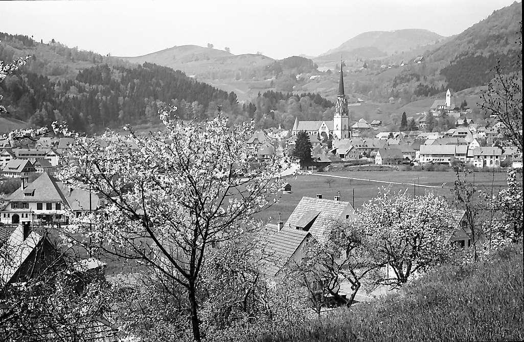 Durch Blüten auf den Ort Schönau, Bild 1
