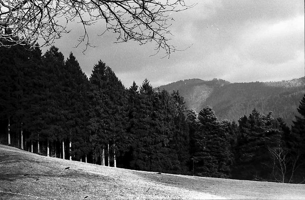 Herbstlicher Wald bei Horben, Bild 1