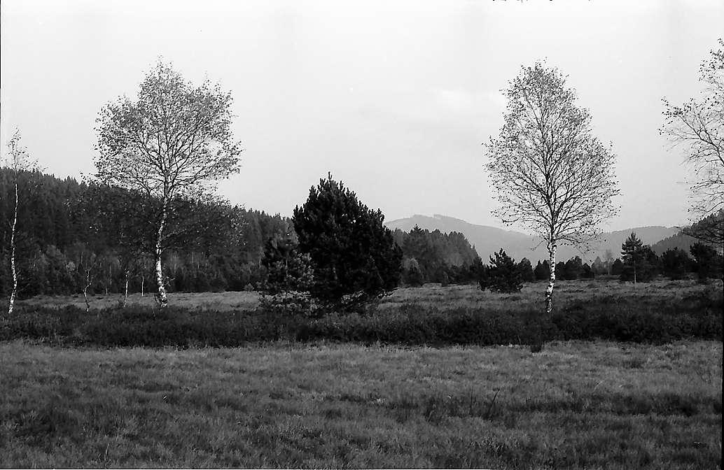 Hinterzartener Moor, Bild 1