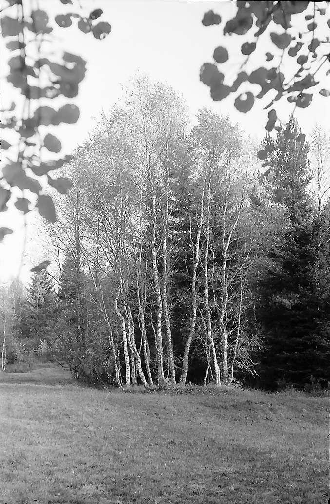 Baumgruppe im Hinterzartener Moor, Bild 1