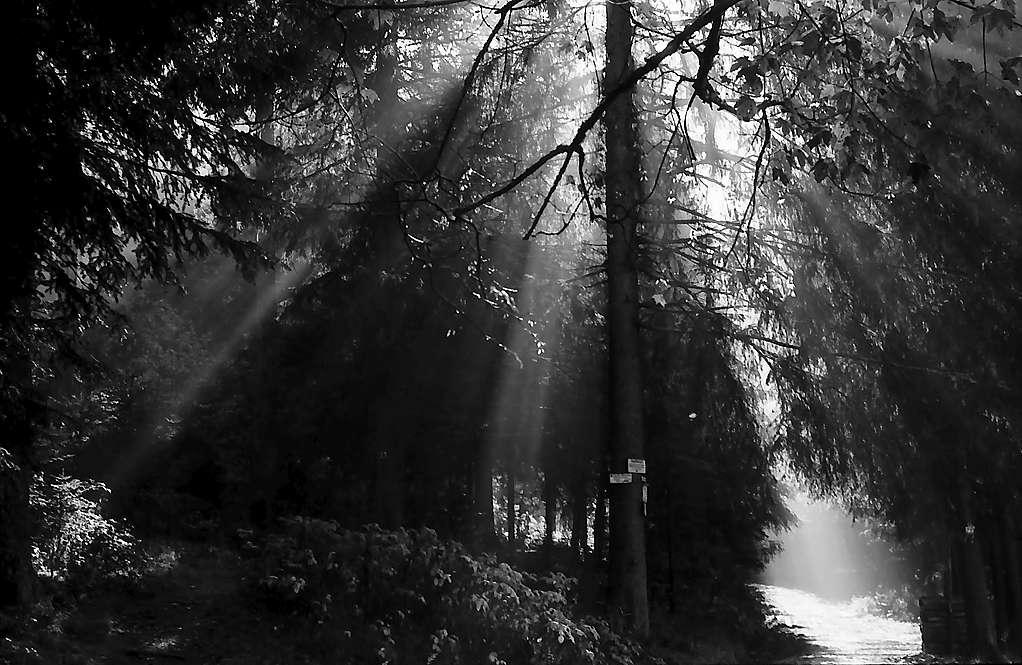 Herbstlicher Wald bei Hinterzarten, Bild 1
