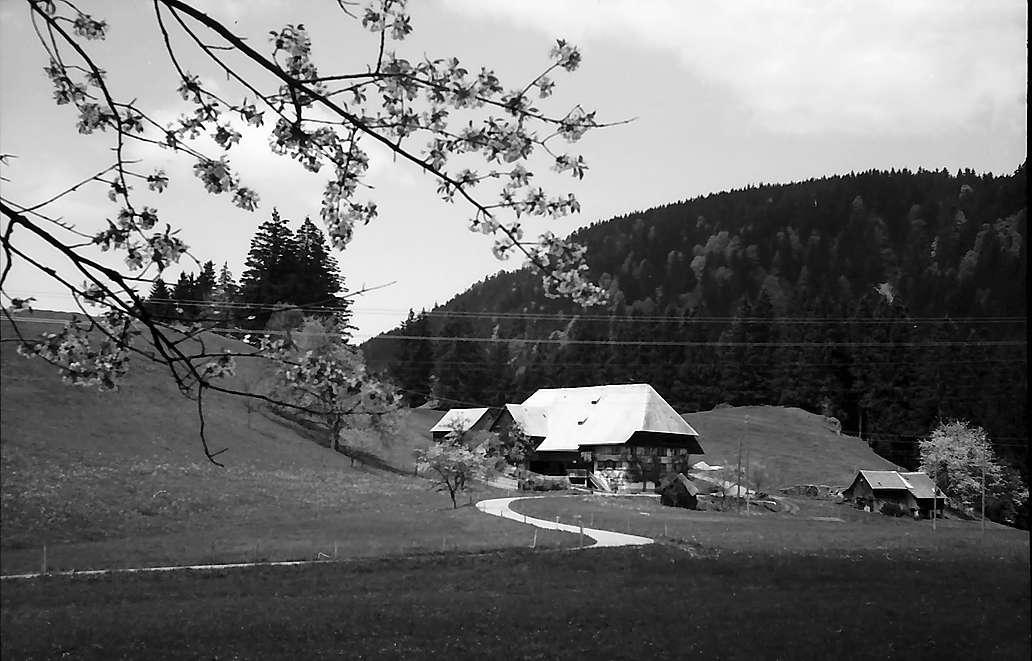Schwarzwaldhof an der B 31 bei Breitnau mit dem Weg im Vordergrund, Bild 1