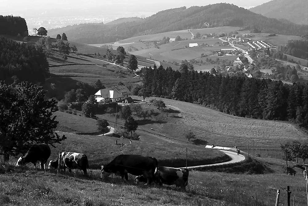 Blick von Eck auf Bohrer, Horben und Freiburg, Bild 1