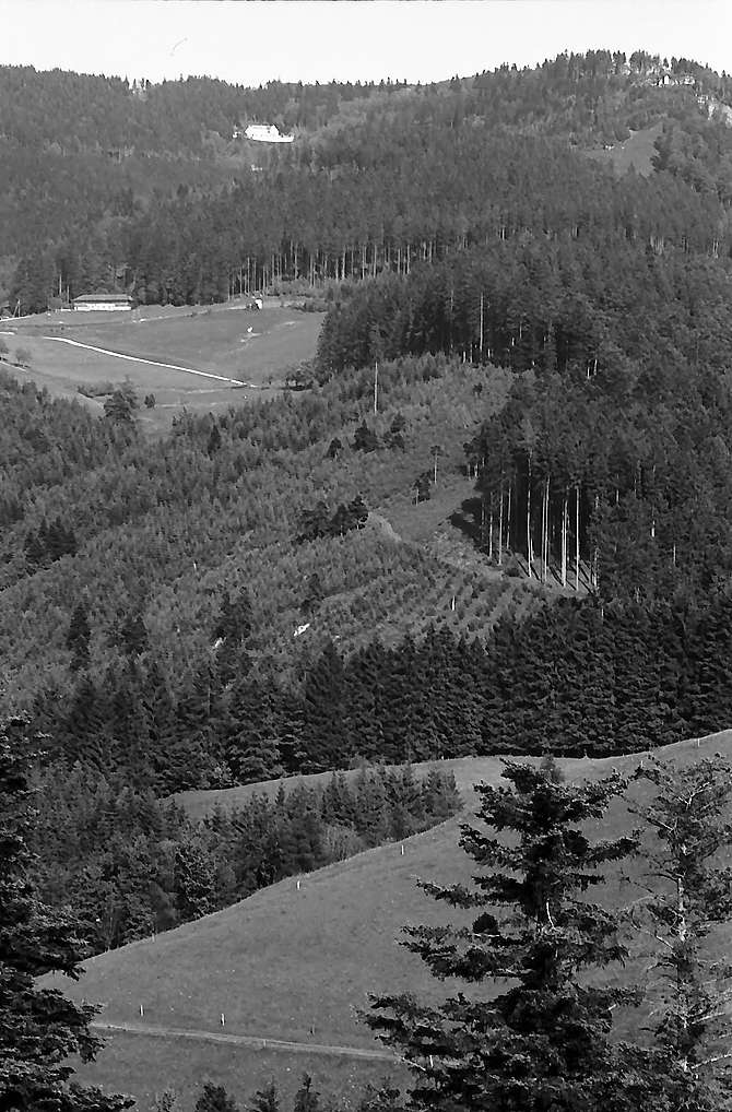 Blick von Eck auf den Schauinsland, Bild 1