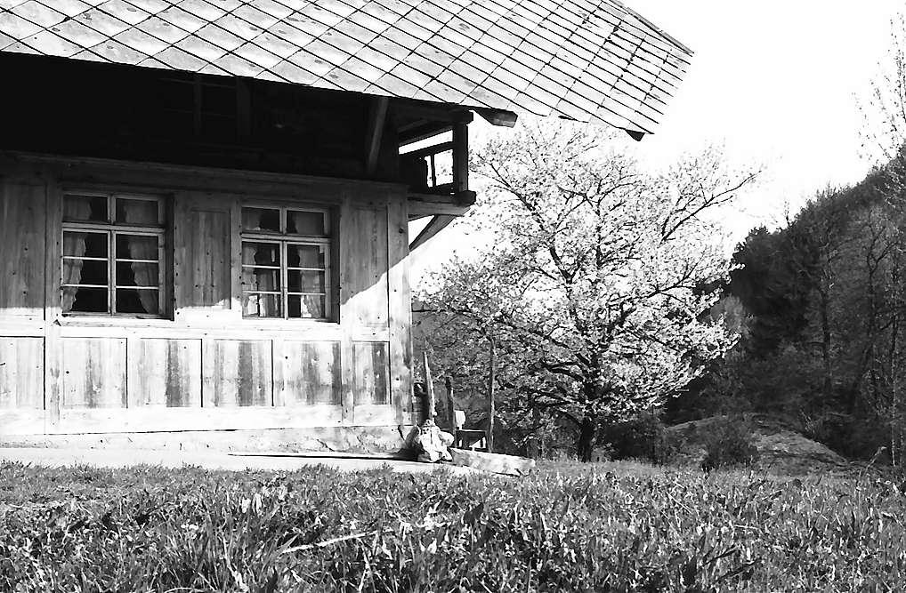 Bauernhaus und Blütenbaum bei Fröhnd, Bild 1