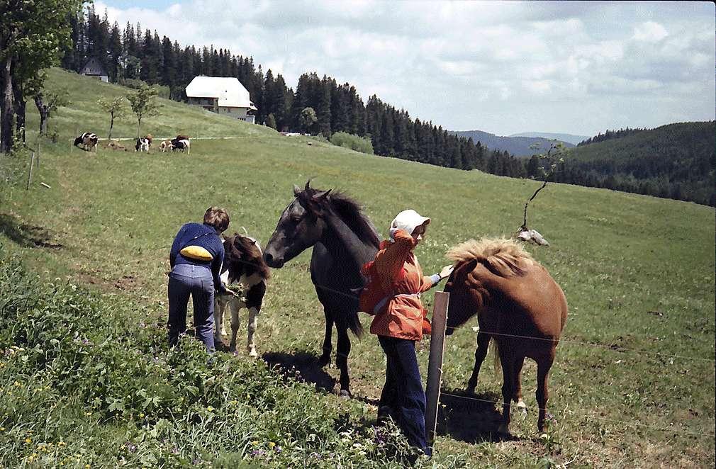Pferde und Kühe mit Kindern auf einer Koppel am Rinken, Bild 1