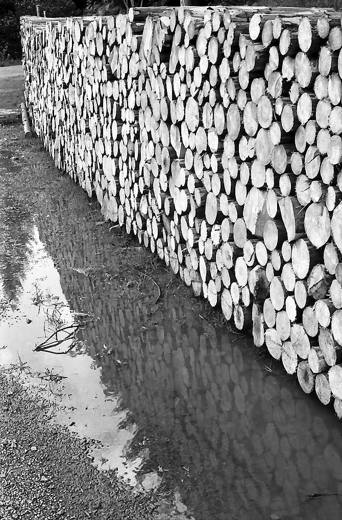 Sich in der Pfütze spiegelnde Holzsteher am Rinken, Bild 1
