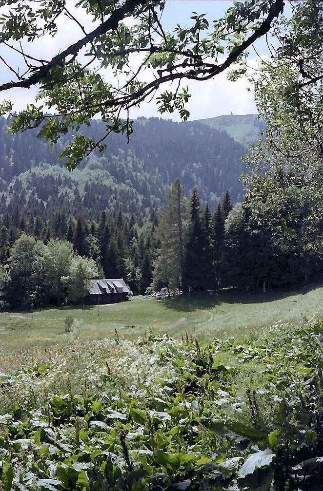 Vom Raimartihof ins Bärental mit Sägewerk, Bild 1