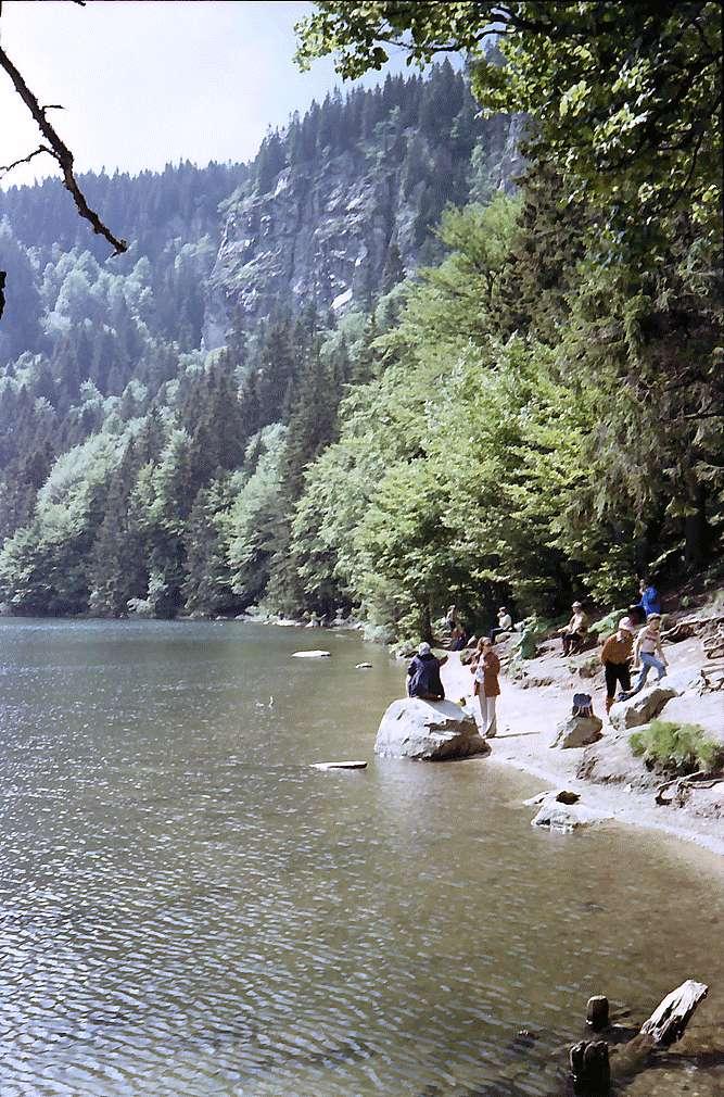 Am Feldsee im Bärental mit dem Feldberg im Hintergrund, Bild 1
