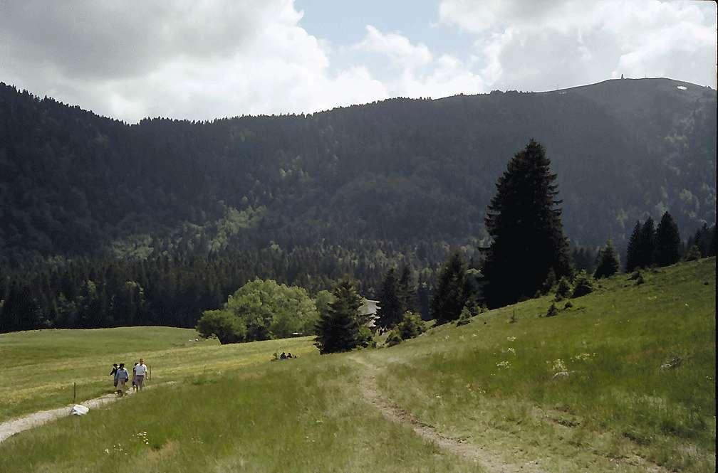 Wiese mit Feldberg im Bärental, Bild 1