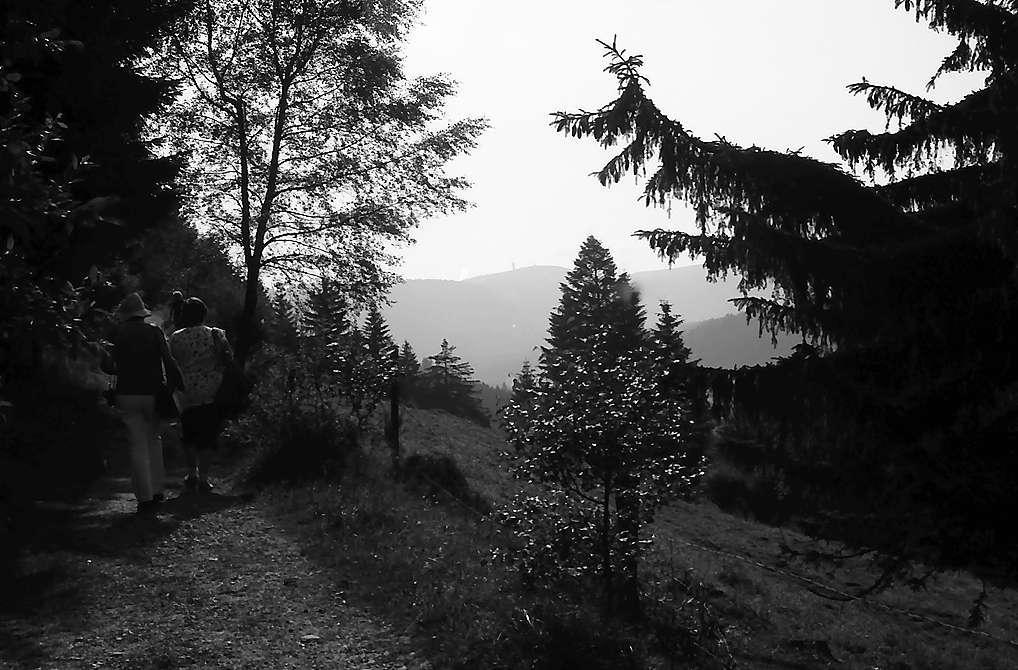 Blick vom Höhenweg Titisee-Feldberg auf den Feldberg, Bild 1