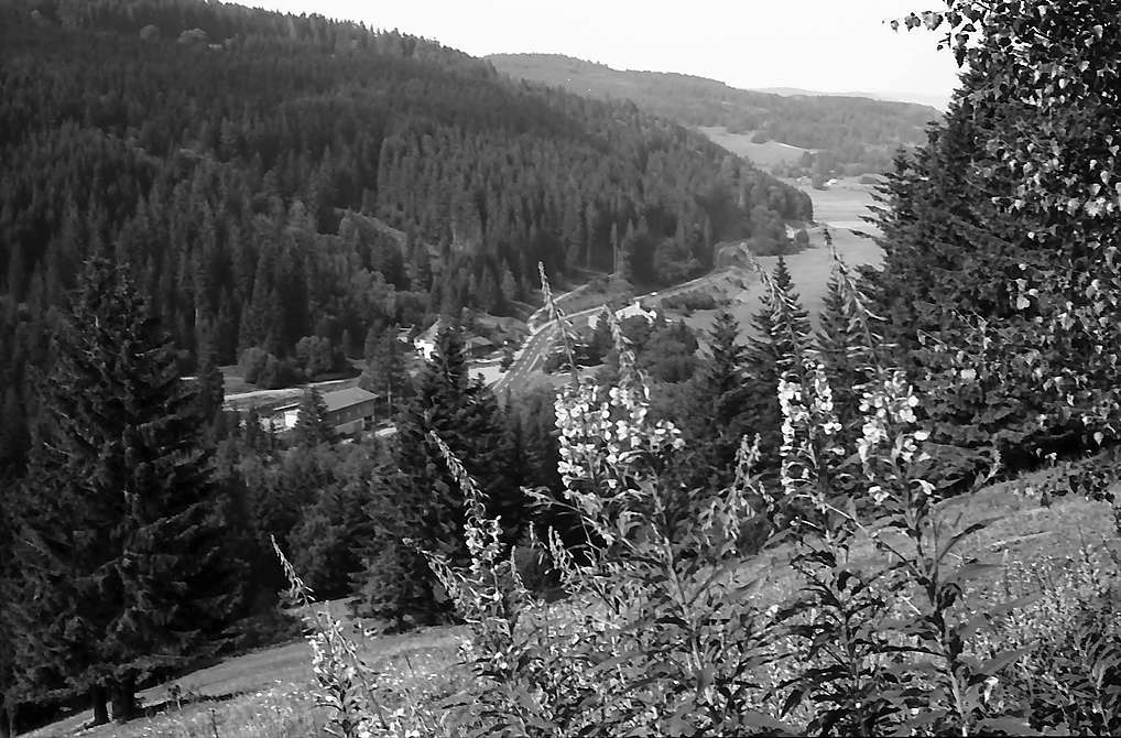 Blick vom Höhenweg Titisee-Feldberg in das Bärental, Bild 1