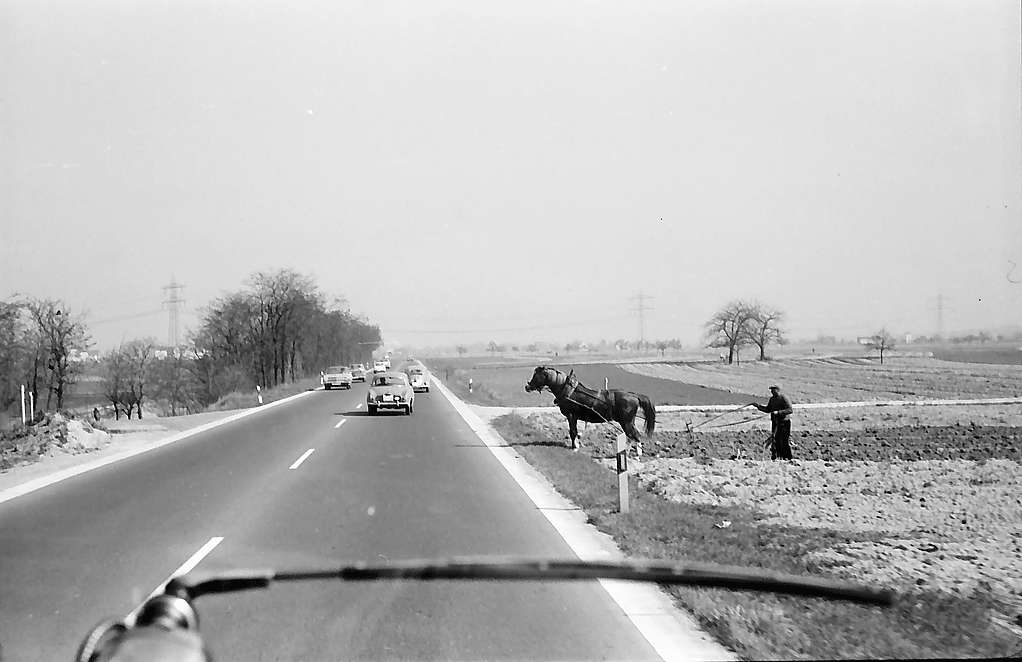Eggenstein: Pferd mit Pflug am Straßenrand der B 36, Bild 1