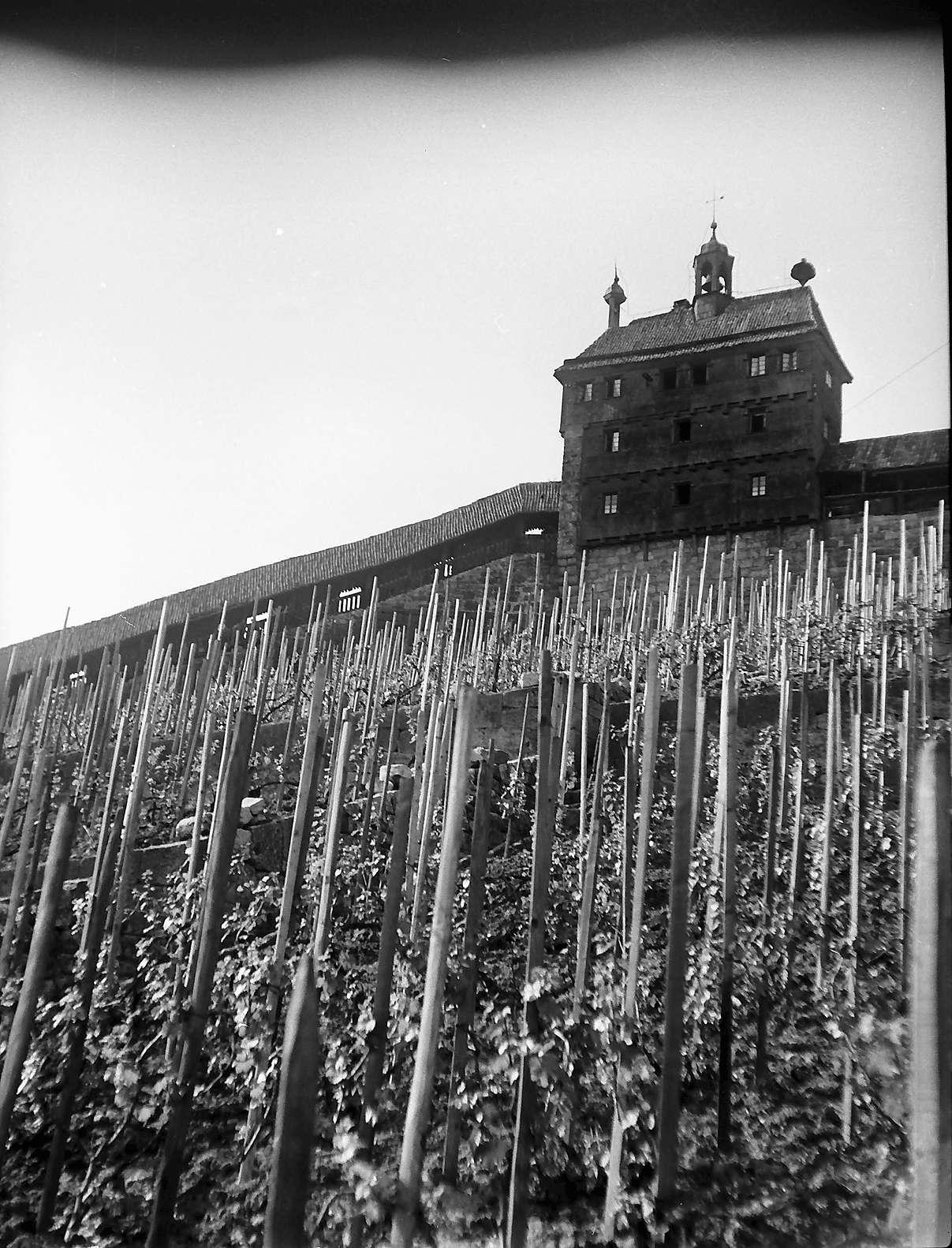 Esslingen: Weinberg mit Wehrmauer, Bild 1