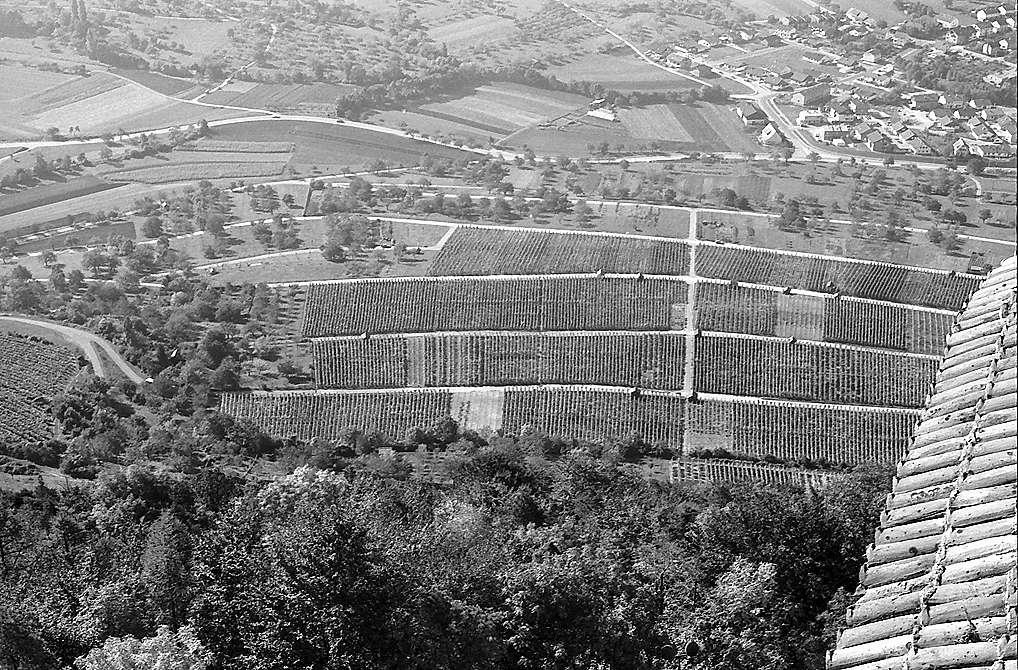 Neuffen: Weinberge am Rand der Burg, Bild 1