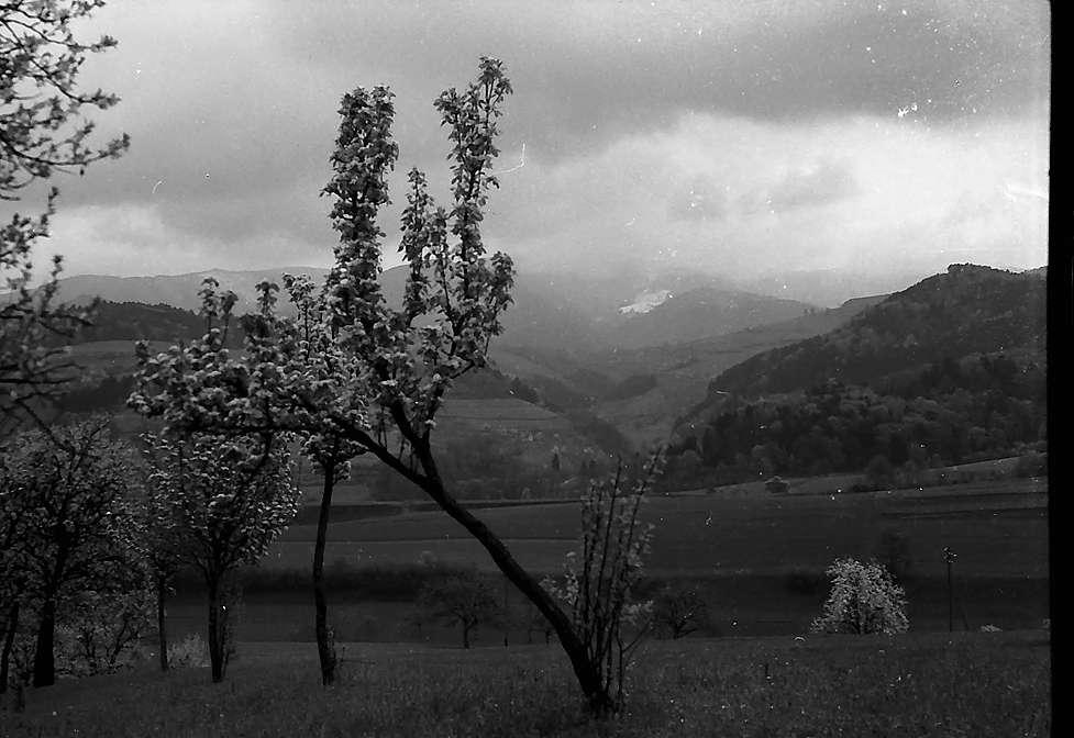 Blick auf den Schauinsland von der Adlerburg in Au, Bild 1