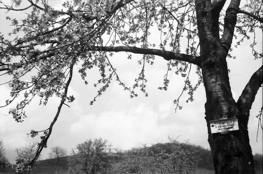 Vogtsburg, Pass: Wegweiser am Blütenbaum, Bild 1