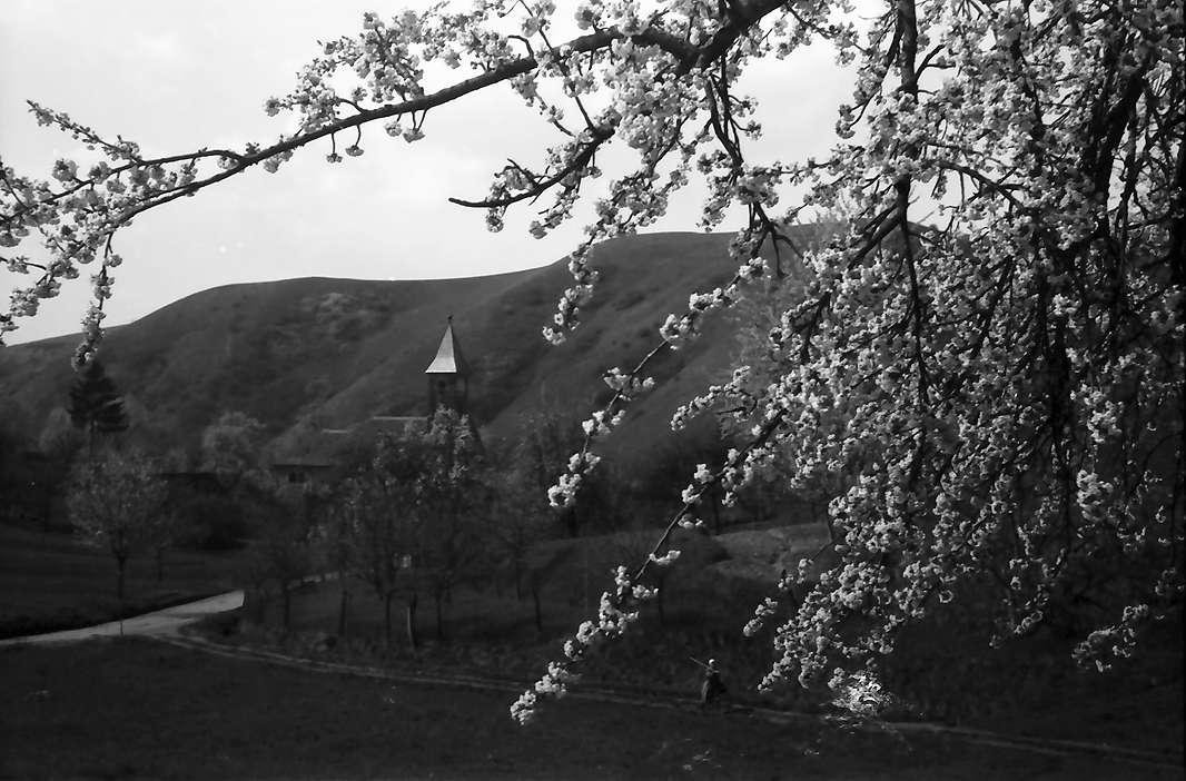 Vogtsburg: Durchblick durch Blütenbäume auf die Kirche von Vogtsburg, Bild 1
