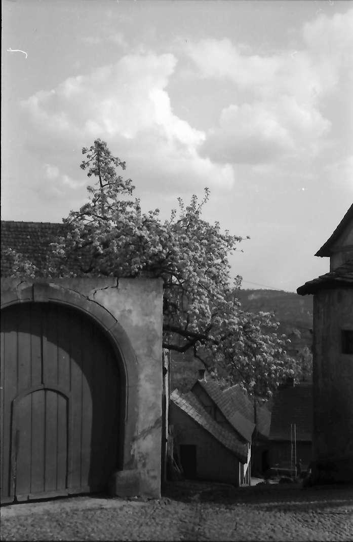 Burkheim: Stadttor in Burkheim, Bild 1