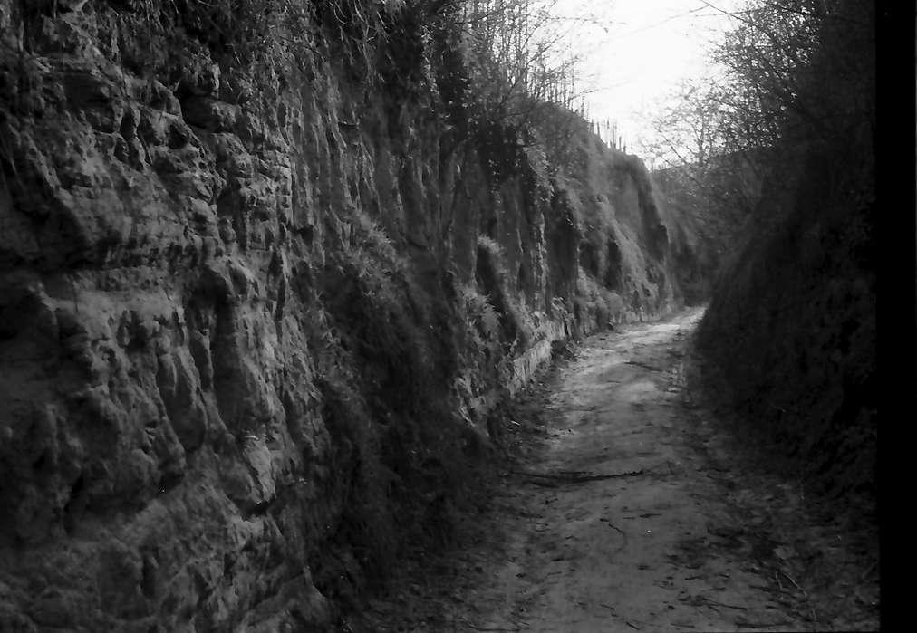 Endingen: Hohlweg zu den Weinbergen, Bild 1