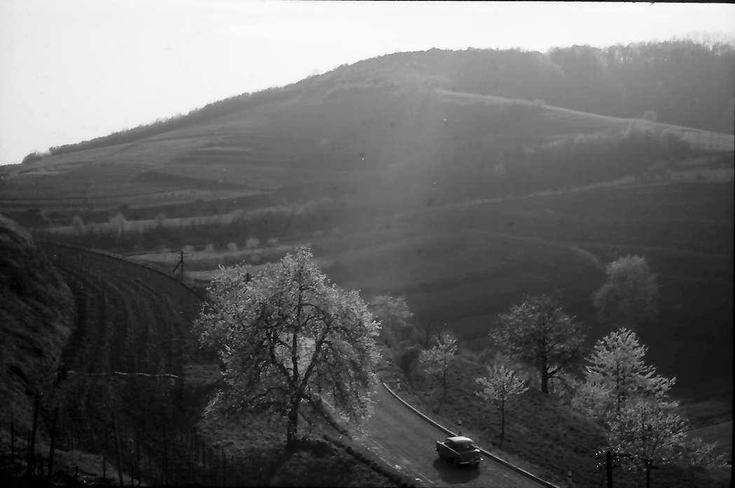 Achkarren; Bickensohl: Straße zwischen Achkarren und Bickensohl, Bild 1