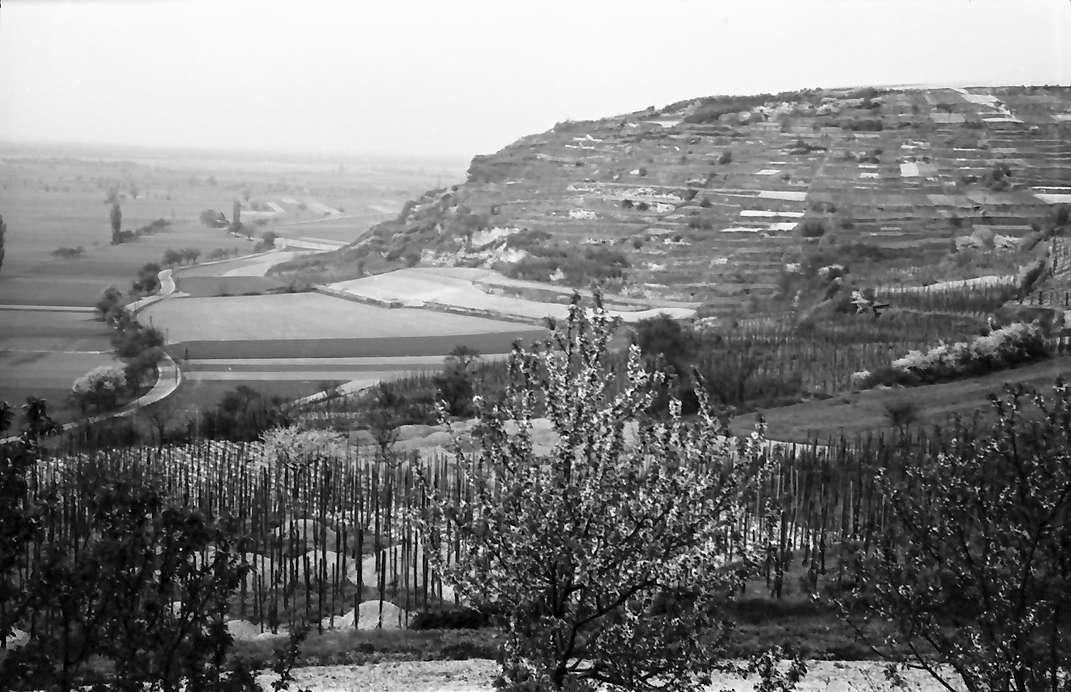 Munzingen: Blick vom Kapellenplateau auf Tuniberg, Bild 1