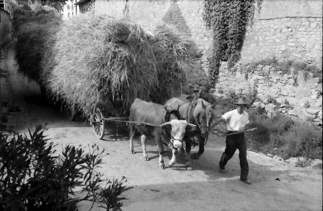 Opfingen: Erntewagen, Bild 1