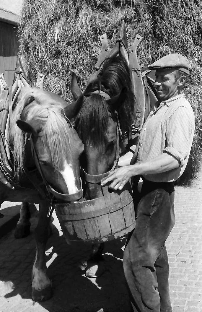 Riegel: Pferde eines Heuwagens bekommen Wasser, Bild 1