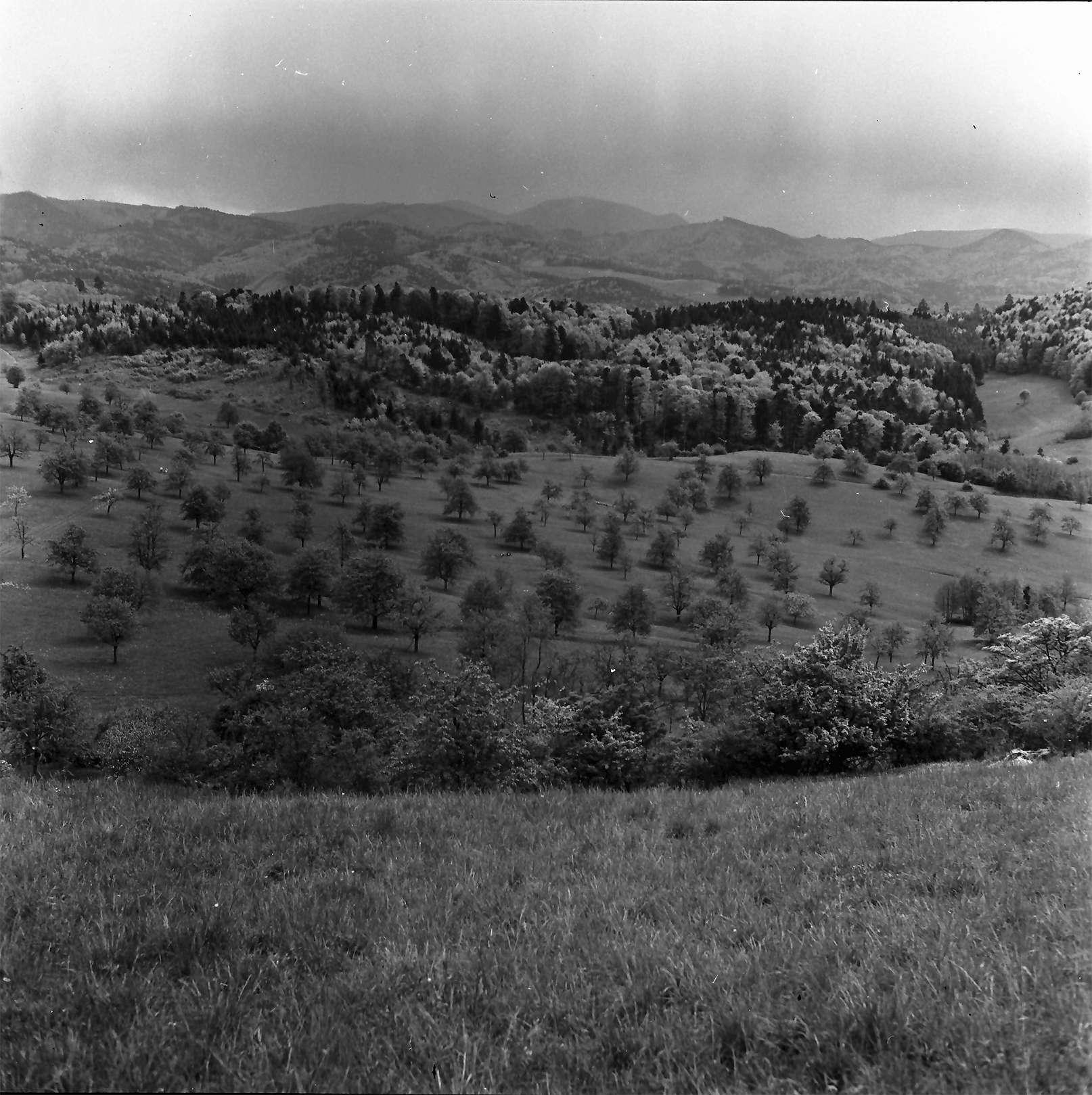Ebringen: Blick von der Berghauser Kapelle bei Ebringen gegen Belchen, Bild 1