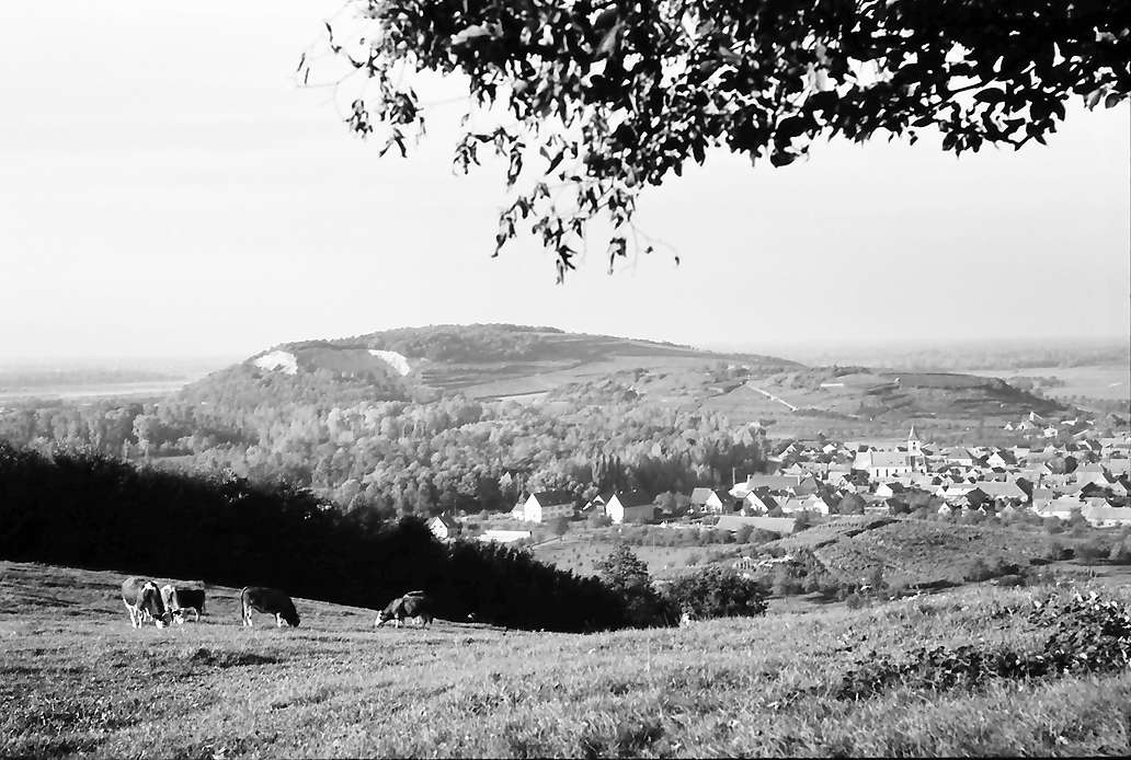 Sasbach: Blick vom Eichert auf Ort, Lützelberg und Limberg, Bild 1