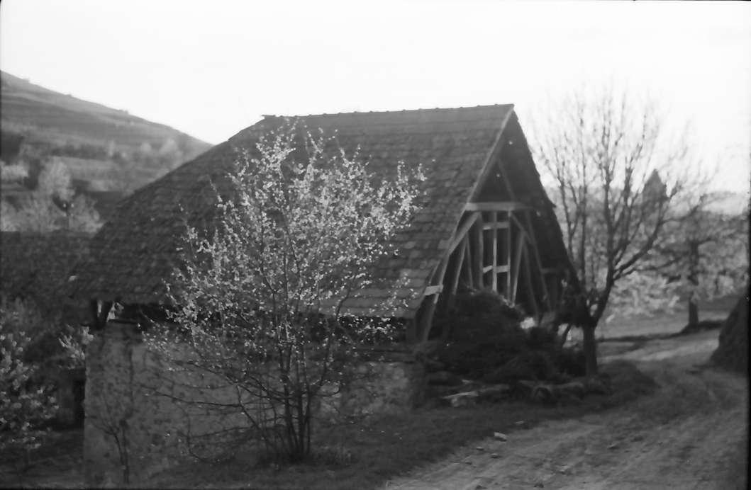 Schelingen: Blütenstrauch und Feldhütte, Bild 1
