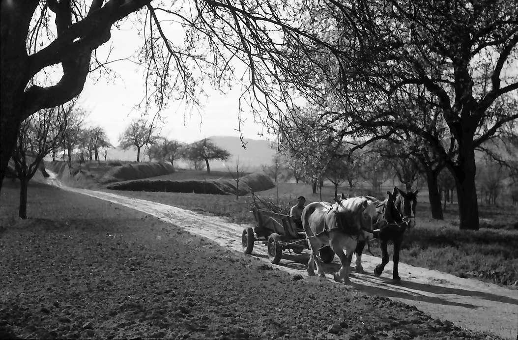 Nimburg: Pferdefuhrwerk auf Feldweg, Bild 1