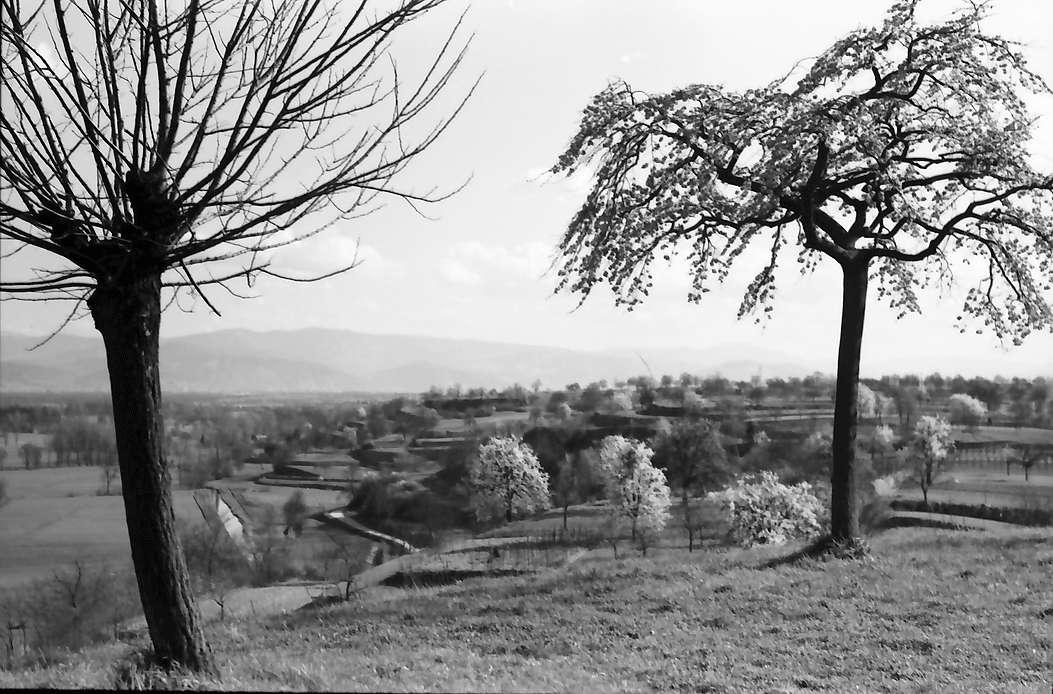 Nimburg: Blick von der Nimburg zwischen zwei Bäumen gegen Schwarzwald, Bild 1