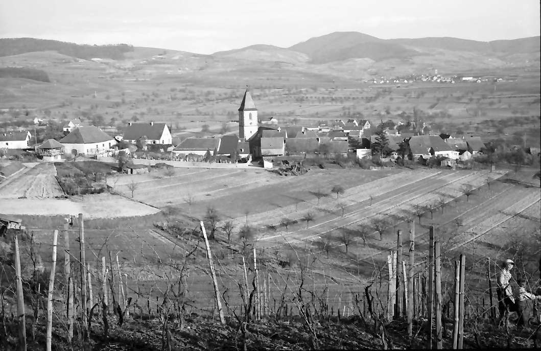 Burkheim: Blick vom Burgberg auf Weinberg und Burkheim, Bild 1