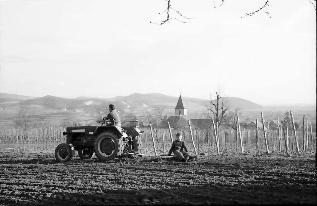 Burkheim: Traktor mit Egge, Hintergrund Ort, Bild 1