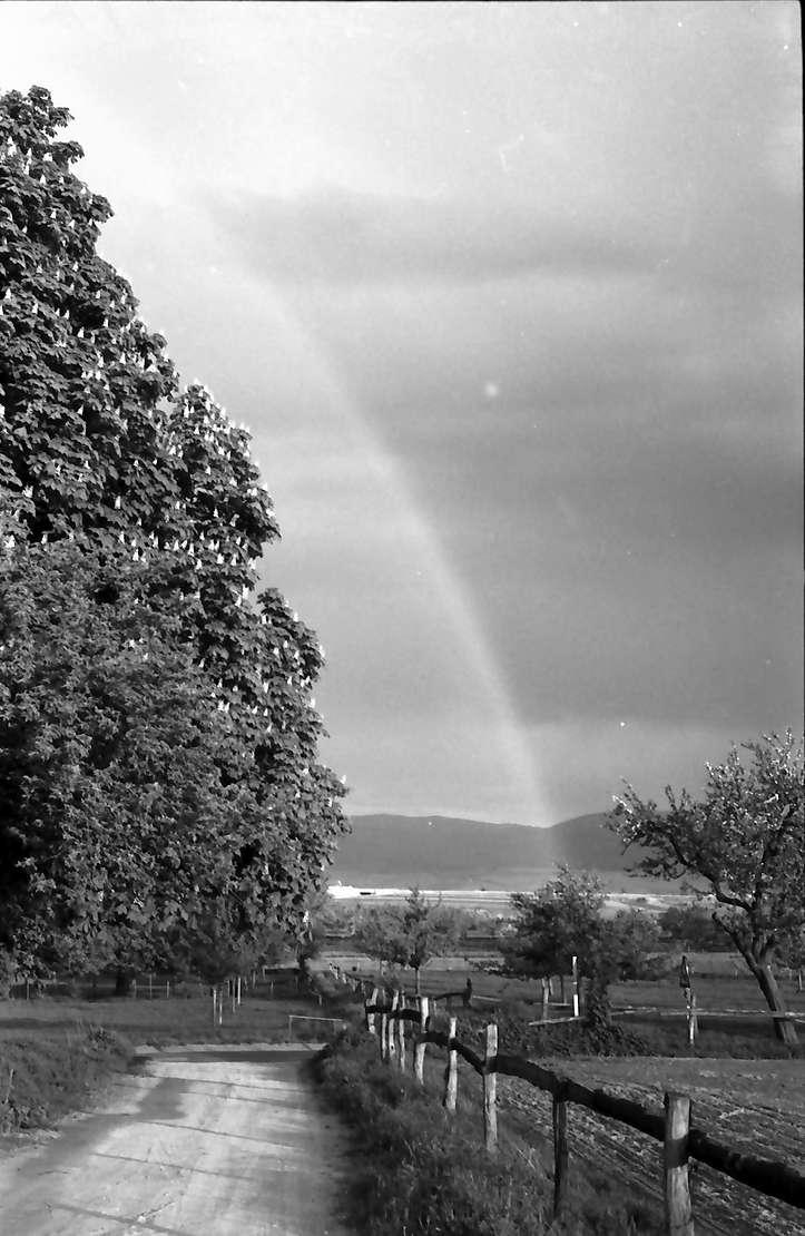 Munzingen: Regenbogen zwischen blühenden Kastanien und Obstbäumen, Bild 1