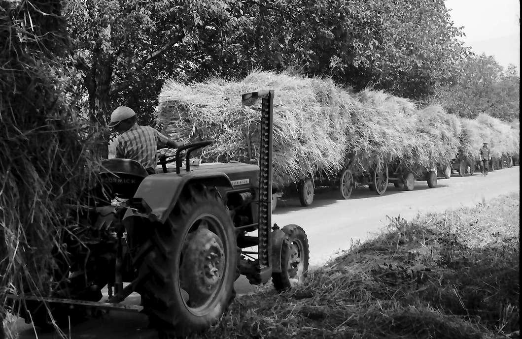 Ihringen: Junge auf Traktor bei Erntewagen, Bild 1